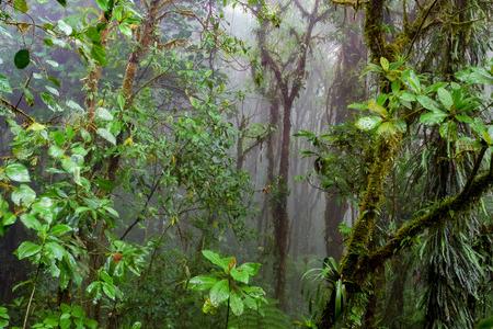 מונטה וורדה – סיור בשמורת יער העננים – סיור לילי