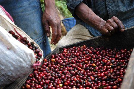 הר געש פקאייה – רכיבת סוסים- חוות קפה - אנטיגואה