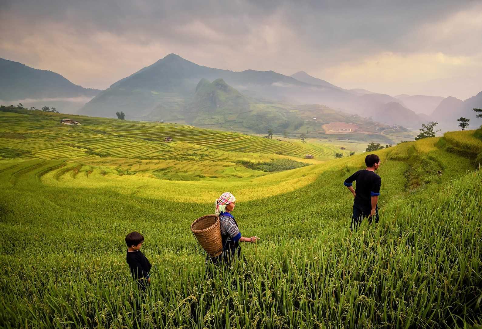 (ג') טרסות האורז המרהיבות - יום טיול בכפר בטאד